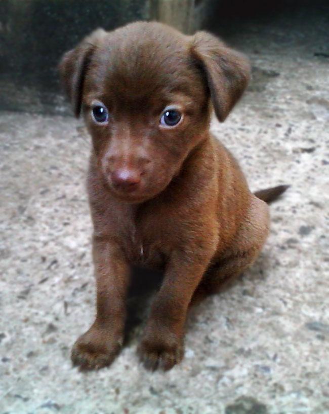 Filhote de Cachorro (foto: Evelyn Cristina)