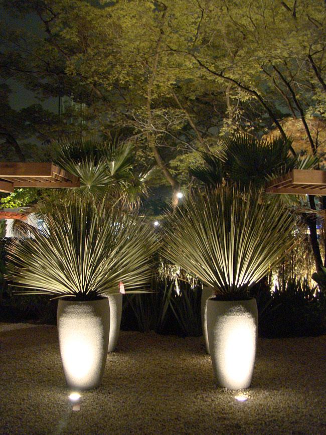 Iluminação diferente deixa seu jardim com efeito cenográfico (foto