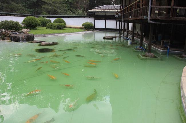 Lago de carpas no Parque Ibirapuera (foto: divulgação)