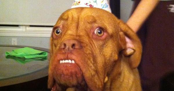 20 Aniversários de Pet's que provam quanto o dia é especial… é totalmente 'The Best'