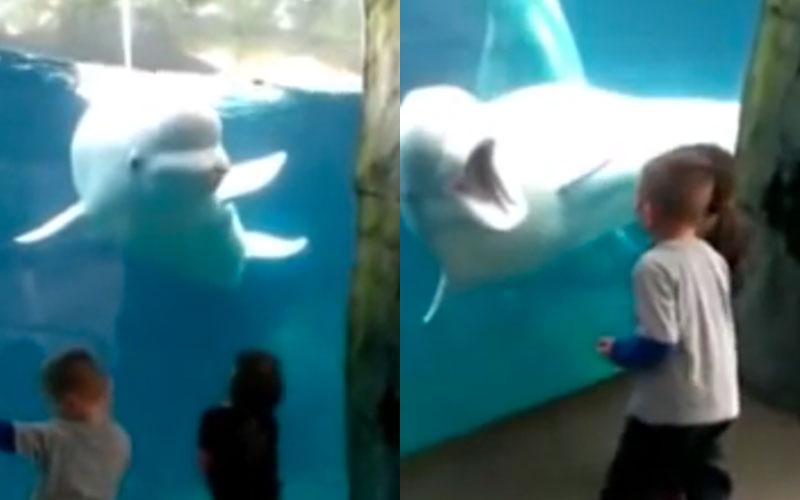 Esta baleia-branca fez algo adorável quando viu essas crianças