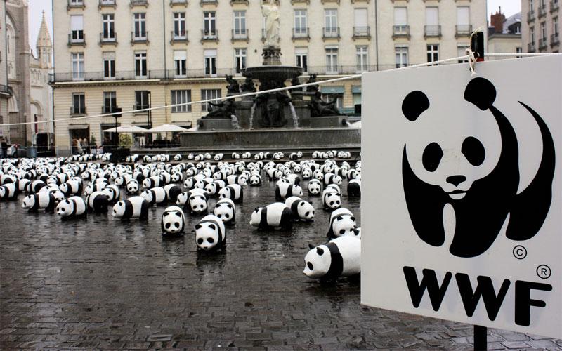 O que a WWF faz?