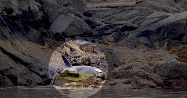 O que fizeram para esta orca prova que ainda existe fé na humanidade